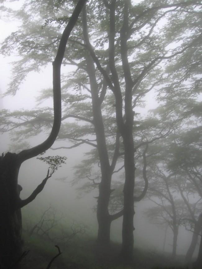 PIC D'IRAU 049.jpg